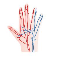 血管のイメージ図.jpg