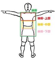 体幹の三つの部位.jpg