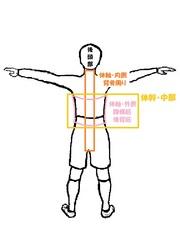 体幹中部・体軸.jpg