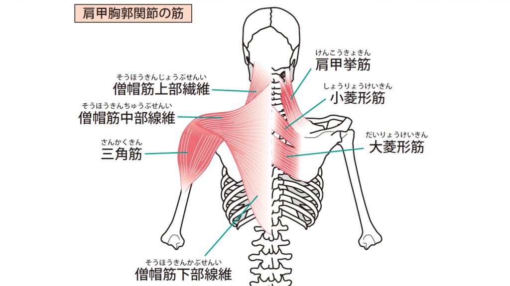 5-6【肩と腕、首とあご】噛み合わせと歯列矯正