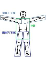 体幹と体肢.jpg