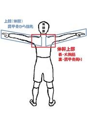体幹上部・大胸筋&肩甲骨周り.jpg